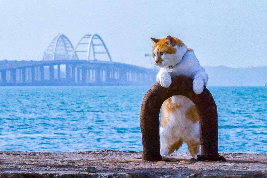 Самые клевые котики России: найдите свой мурчащий антидепрессант!