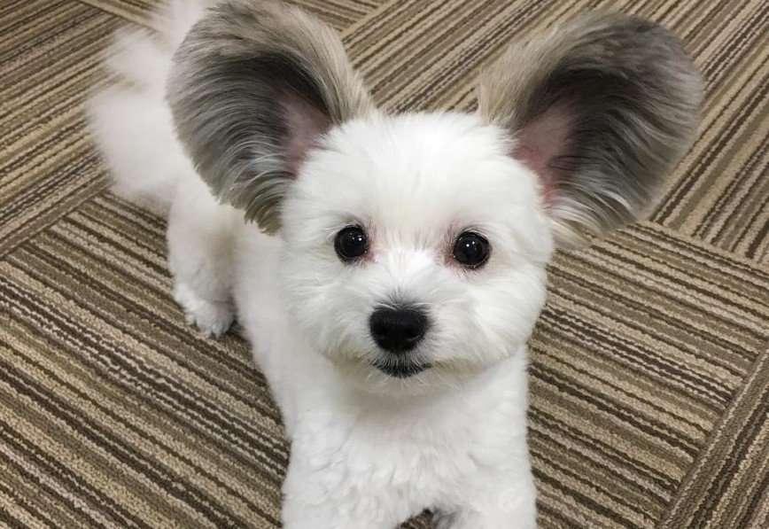 Пес с необычными ушами покорил интернет