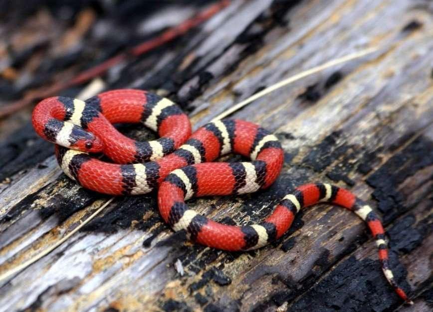 Енот, змея и улитка: как завести домашний зоопарк